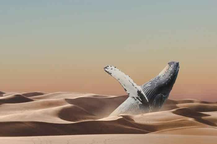 5 रहस्य्मयी चीजे जो रेगिस्तान से निकाली गयी | Mysterious Things Found in the Desert