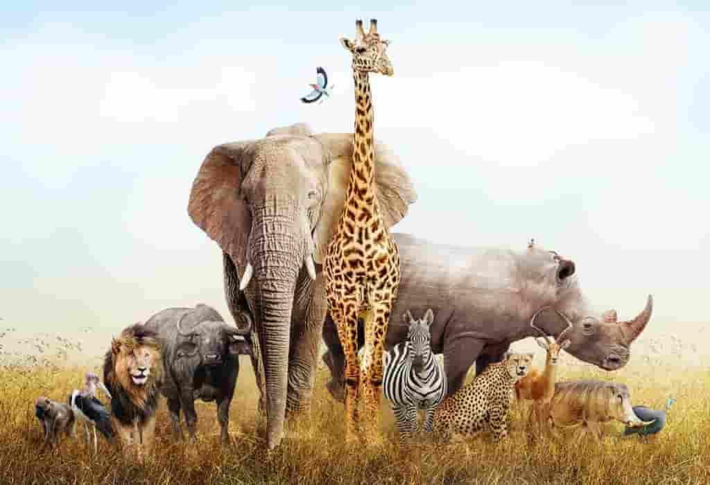 जानवरों के बारे में 100 रोचक तथ्य | 100 Amazing Facts About Animals in Hindi
