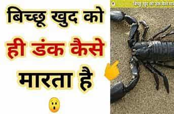 बिच्छू के बारे में 20 रोचक तथ्य । amazing facts in Hindi About Scorpiones